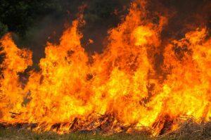 Delito de incendio forestal
